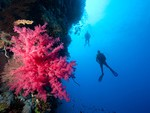 Divers alongside coral wall